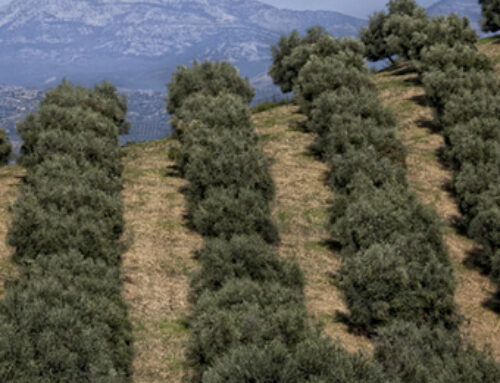 Linea verde a Serragiumenta